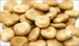 dried lupinis